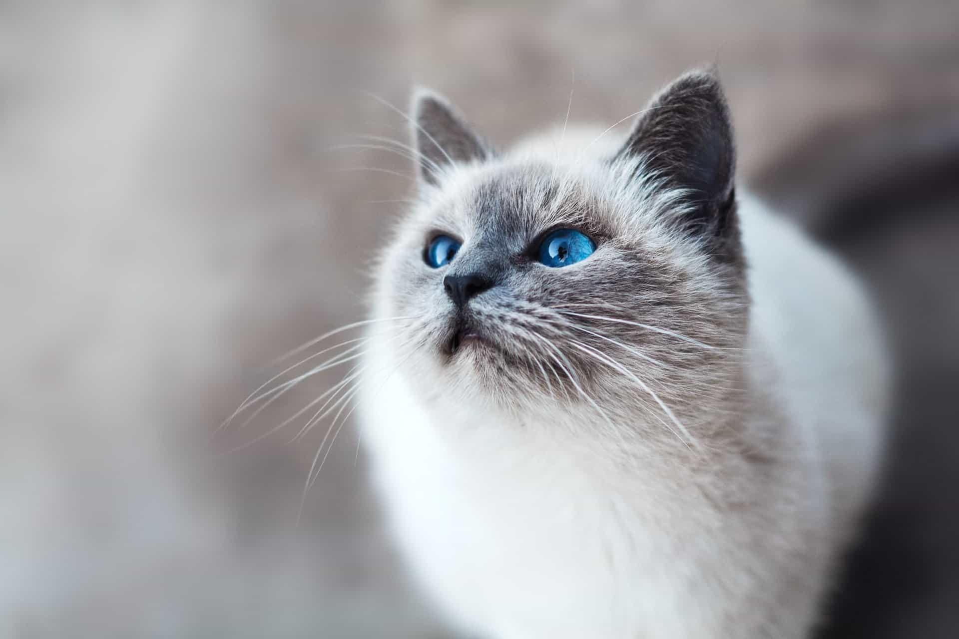 23 Shocking Pet Insurance Statistics to Consider in 2021 (3)