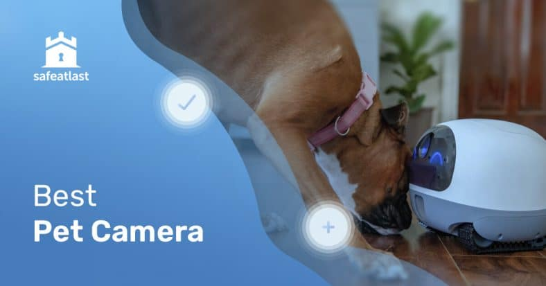How To Select The Best Pet Camera